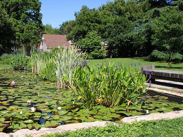 Aquatic Gardens DC   Washington Walking Tours
