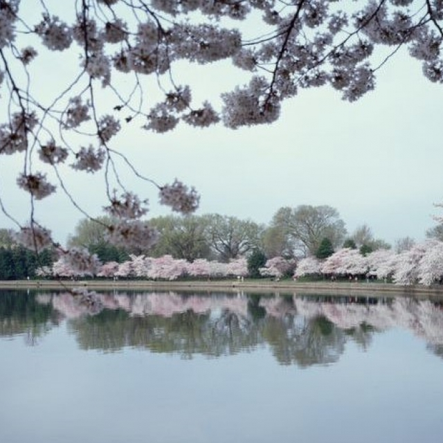 Tidal Basin during Cherry Blossom Festival 2003 CAROL HIGHSMITH Library of Congress