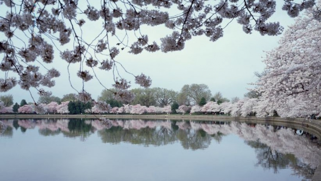 Tidal Basin during Cherry Blossom Festival 2003 CAROL HIGHSMITH Library of Congress